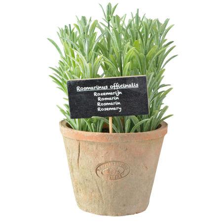 Műnövény dekoráció, rozmaring, nagy