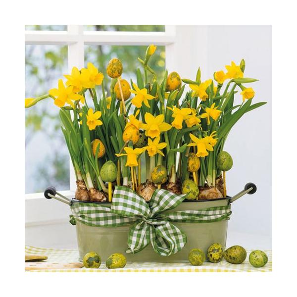 AMB.23301605 Daffodils papírszalvéta 33x33cm,20db-os