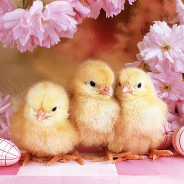 AMB.23301585 Spring Chickens papírszalvéta 33x33cm,20db-os