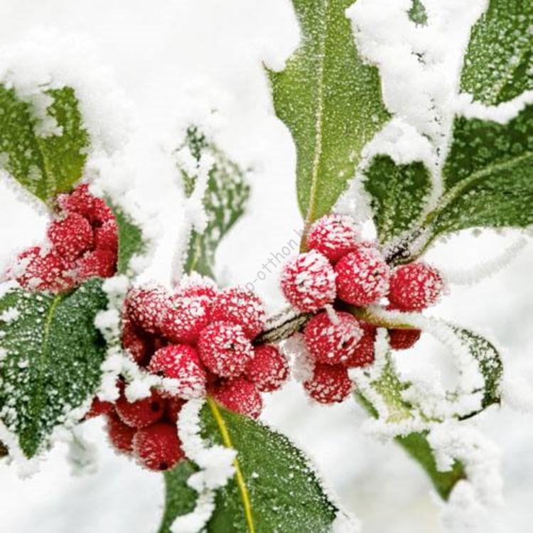 AMB.13305250 Winter Berries papírszalvéta 33x33cm, 20db-os