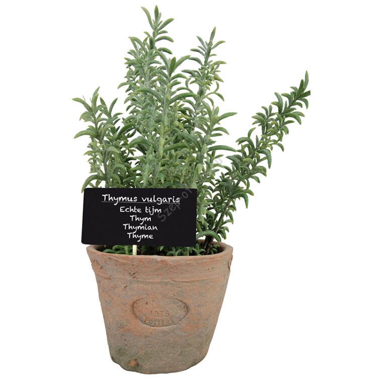 Műnövény dekoráció, kakukkfű, nagy